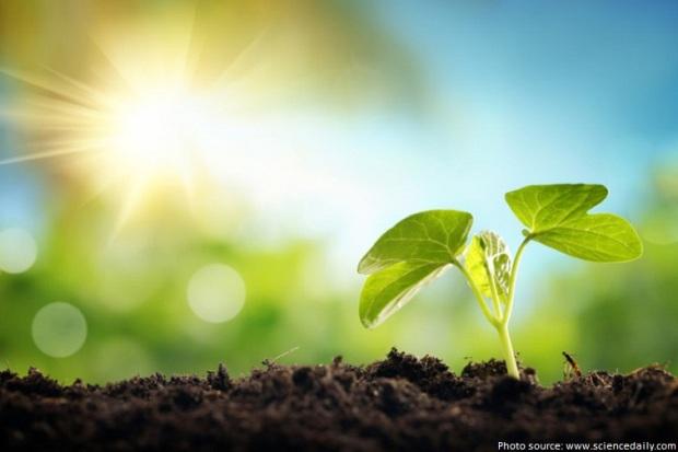 plants-sunlight-energy.jpg